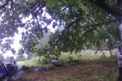 11- Святая гора - под шатром древнего дуба